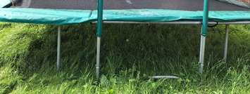 How-to-Prepare-Grass-for-Trampoline