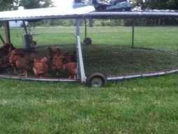 A mobile trampoline chicken coop
