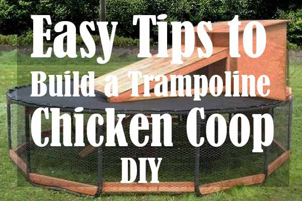 Easy Tips to Build a Trampoline Chicken Coop DIY