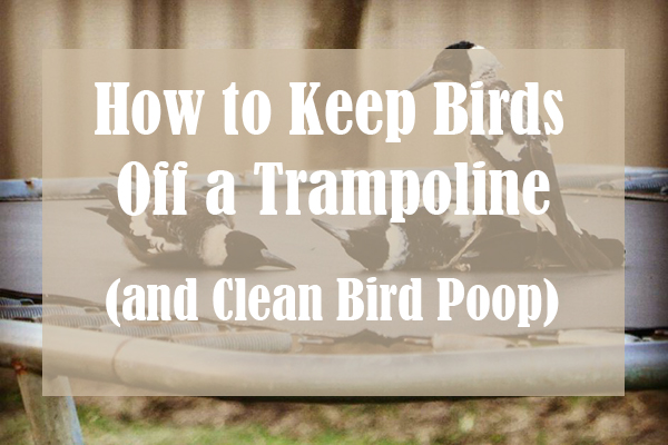 How to Keep Birds Off a Trampoline (and Clean Bird Poop)