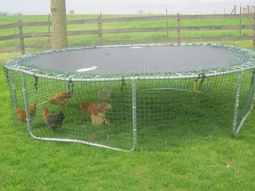 The chicken coop trampoline project