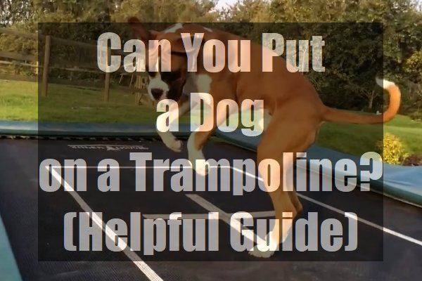 Can-You-Put-a-Dog-on-a-Trampoline-Helpful-Guide-pin