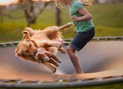 How-to-Teach-a-Dog-To-Jump-on-a-Trampoline-sml